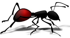 Natural Home Solutions for Ant Invasions